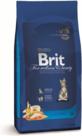 Brit-premium-KITTEN